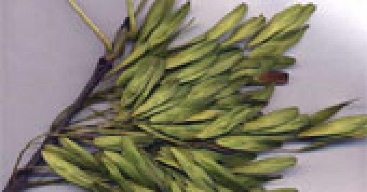 Kelta fahoroszkóp (2.)