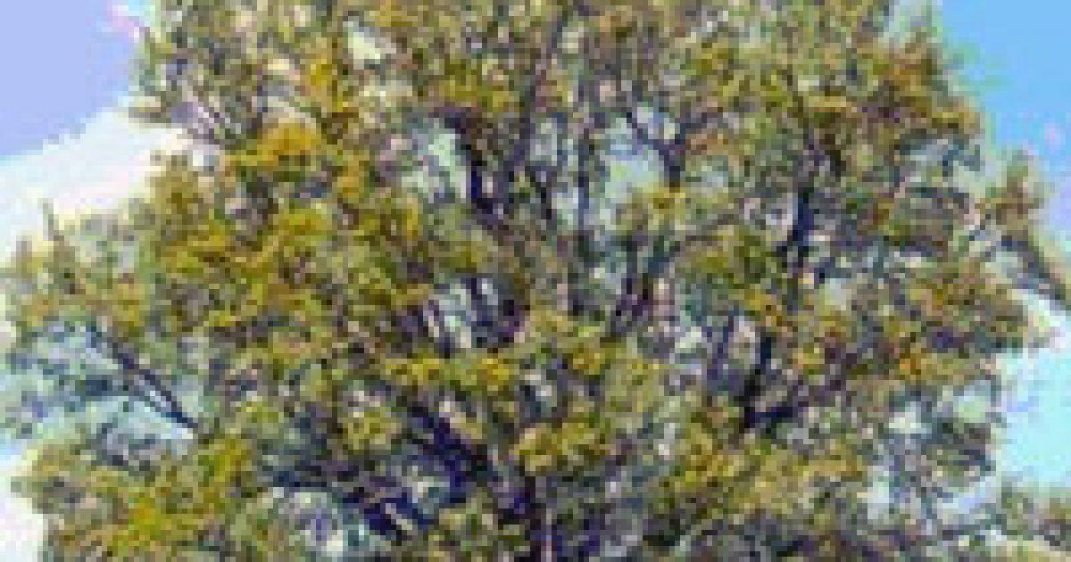 Kelta fahoroszkóp (4.)