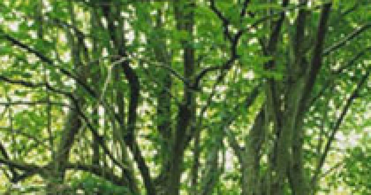 Kelta fahoroszkóp (5.)