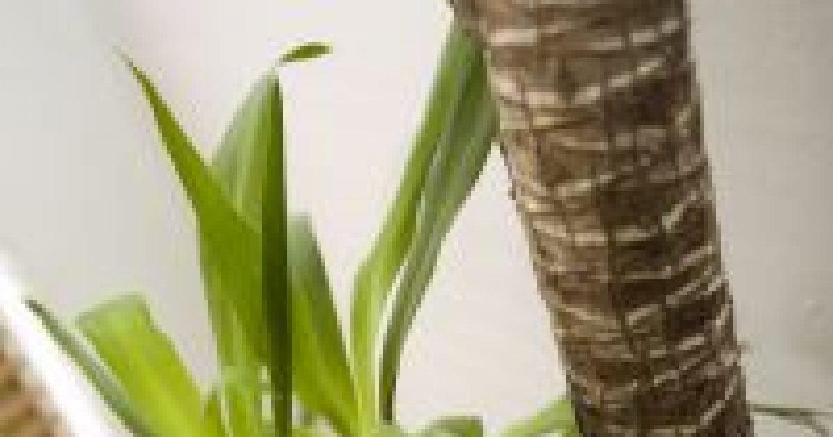 Allergén növények a kertben és a lakásban