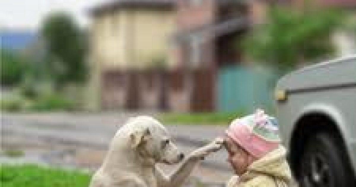 Kutyaharapás és kutyalélektan