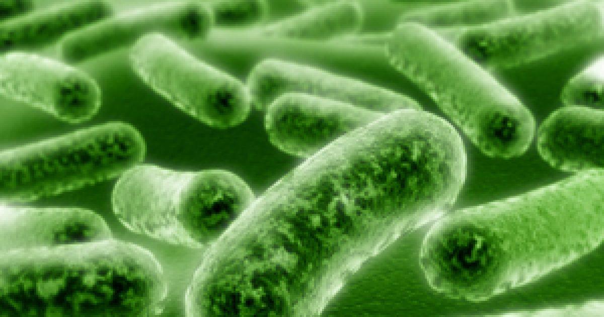 A talajbaktériumok szerepe | paperweb.hu