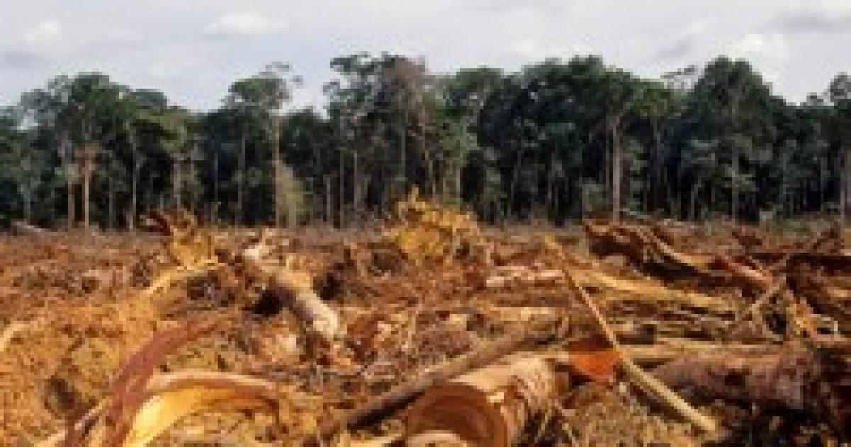 A fák pusztulását az emberek egészsége is megsínyli