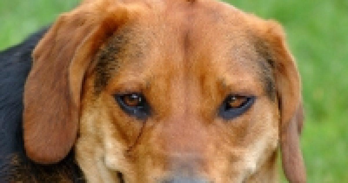 Kutya: ébresztőóra és riasztó epilepsziásoknak