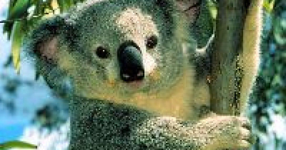 Sok állat még az embereknél is okosabb