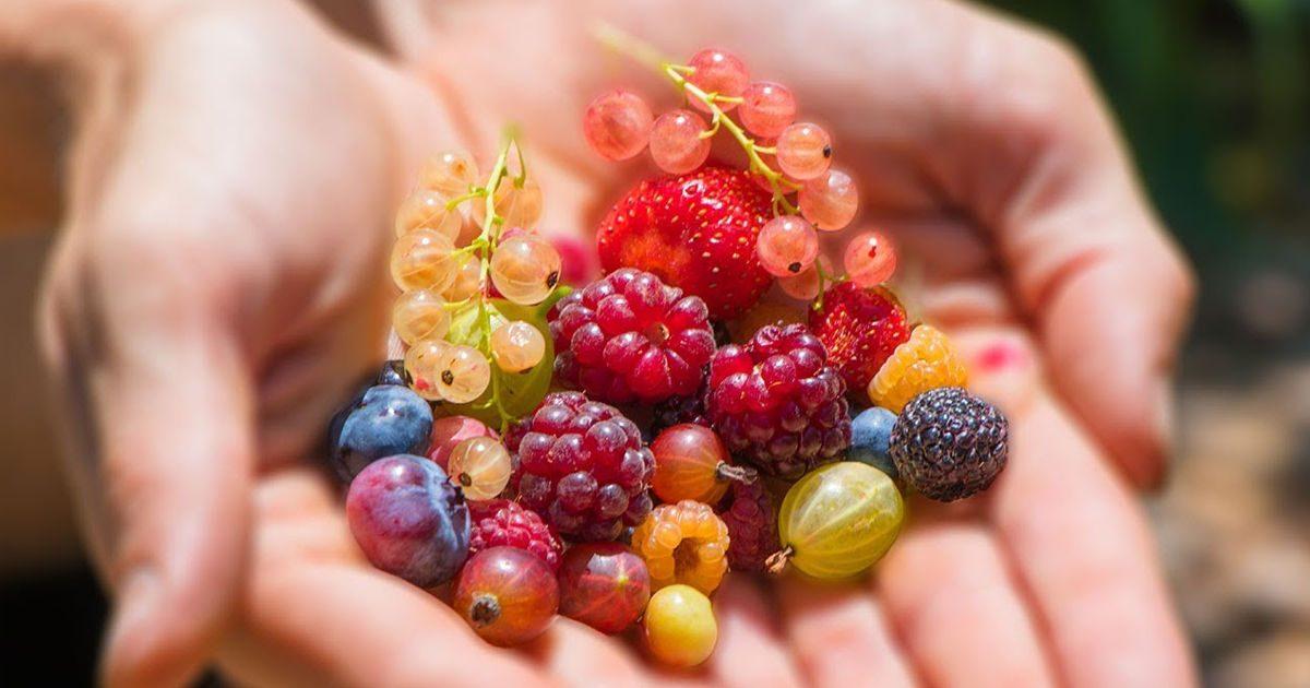 Havi fél kiló mínusz bogyós gyümölcsökkel