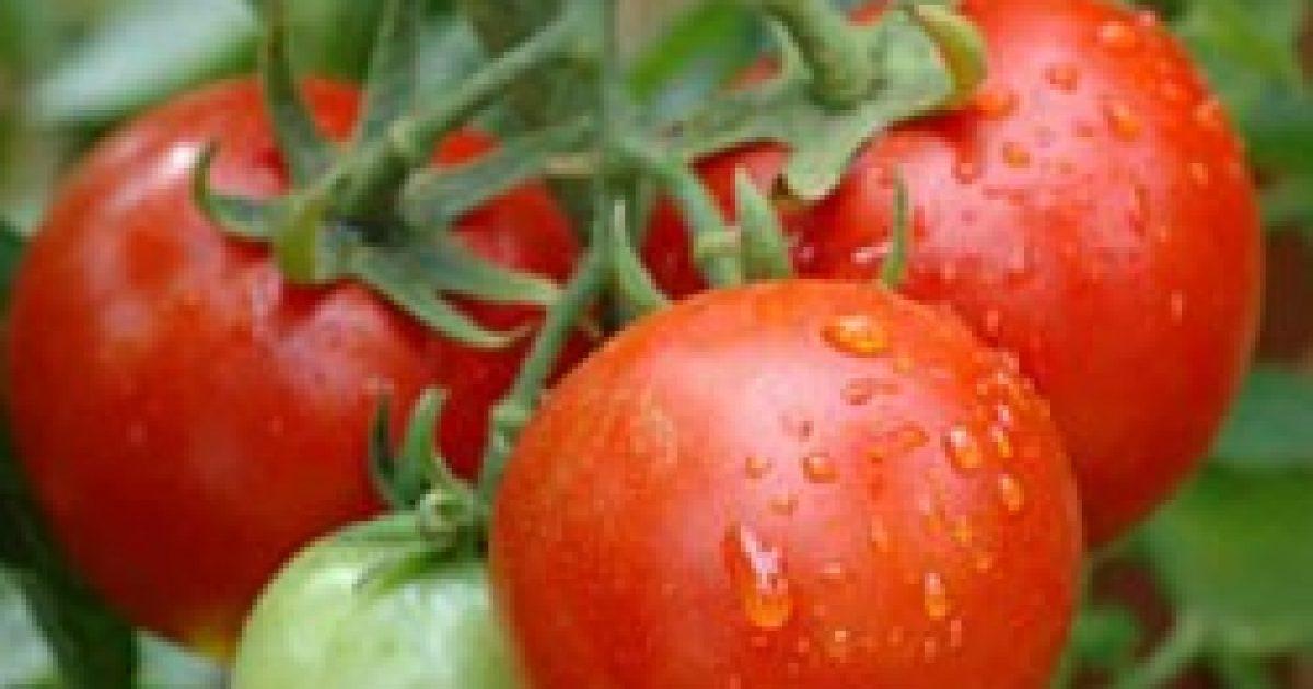 Bőrvédő paradicsompirula