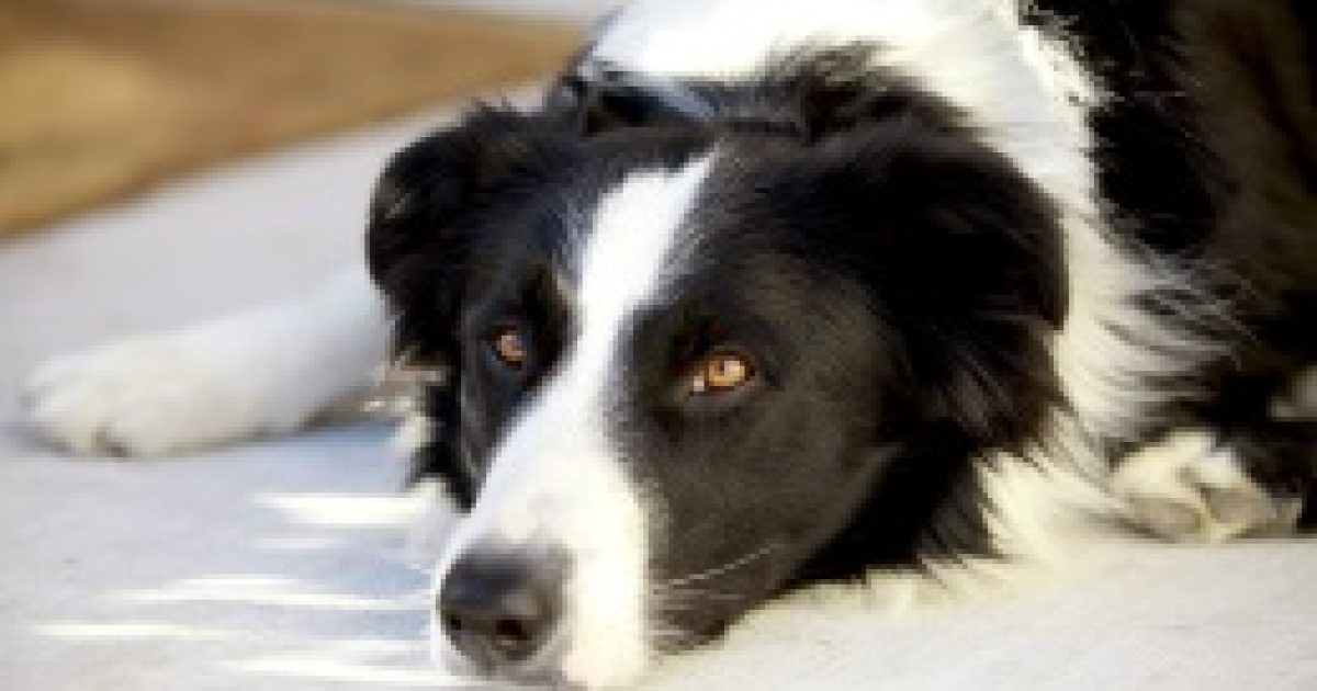 Okos kutya, jó kutya!