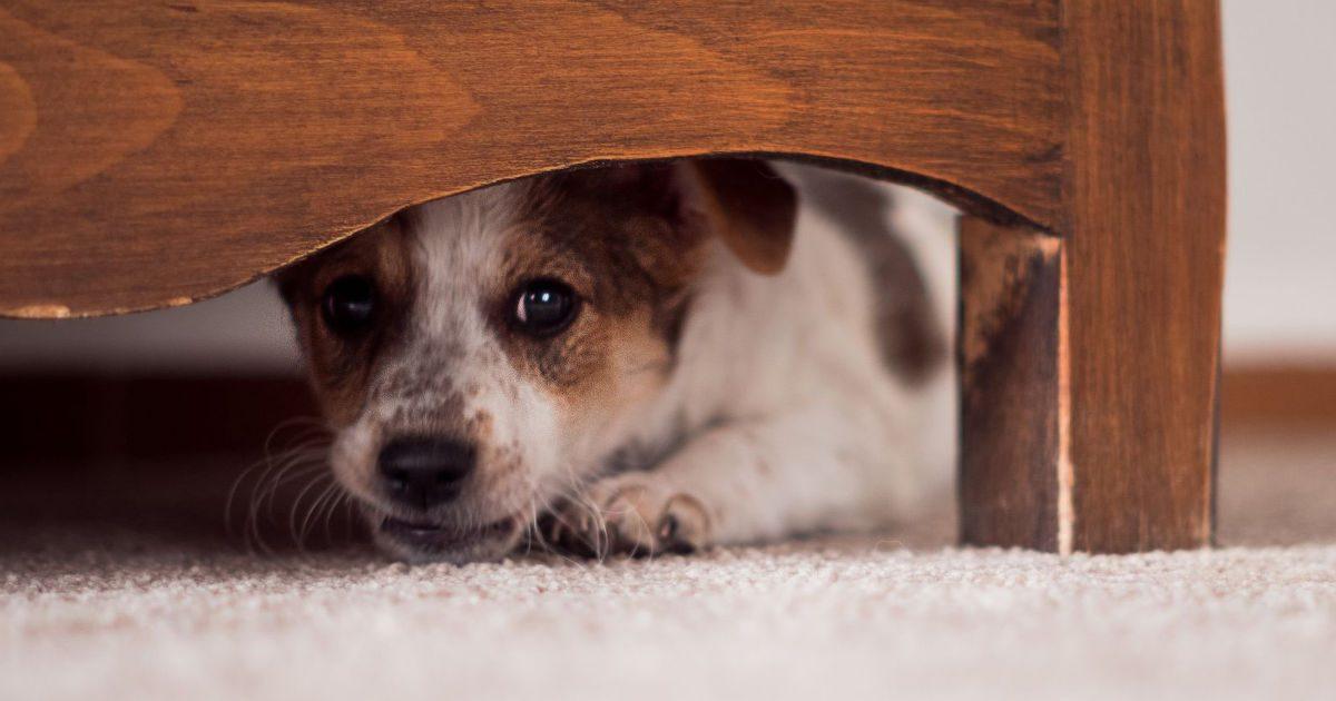 Figyeljen oda, ha a kutyája stresszes!