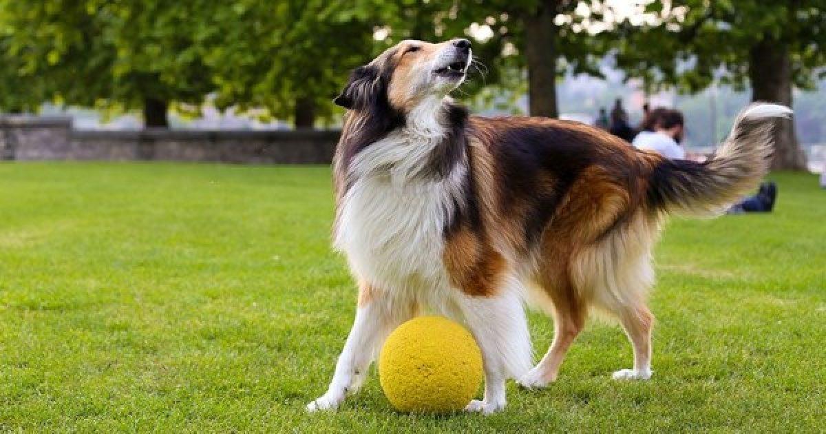 A kutyák nem követnek értelmetlen utasításokat