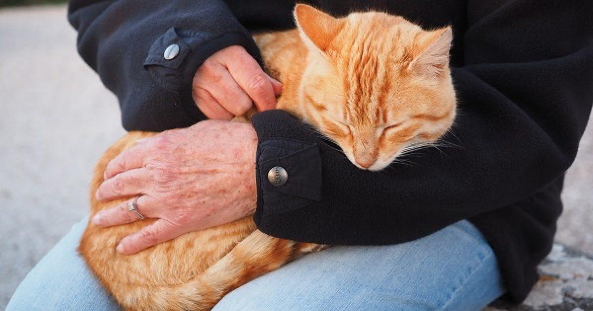 A háziállat segít a mentális problémákban
