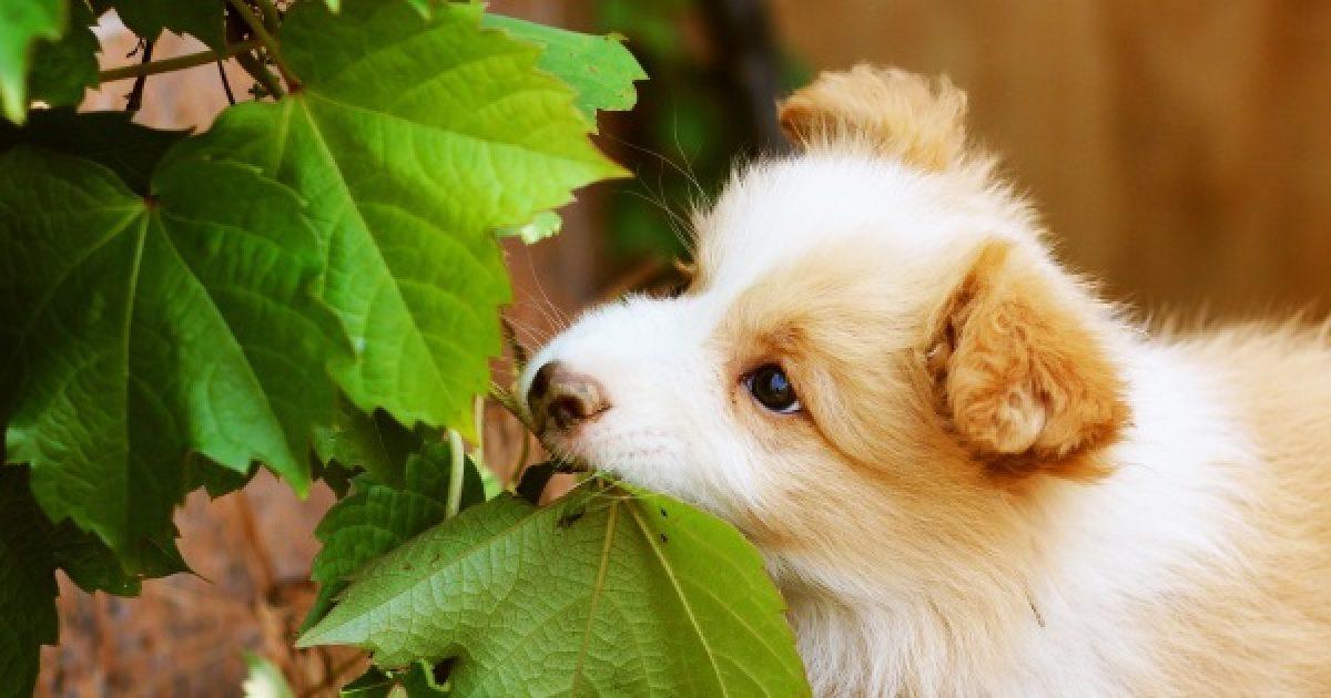 Jelek, hogy ideje változtatni kutyája étrendjén