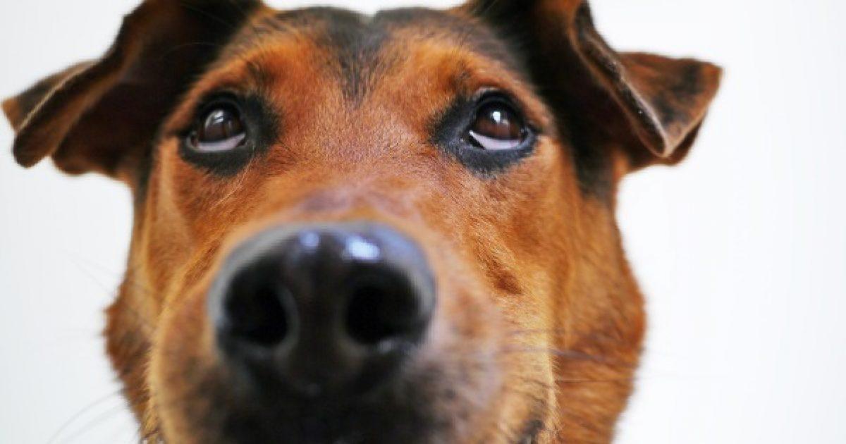 Segítsen kutyáján homeopátiával!