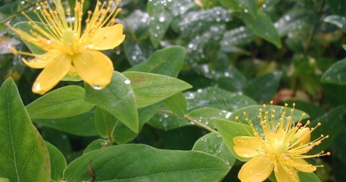 Gyógynövények a szép bőrért