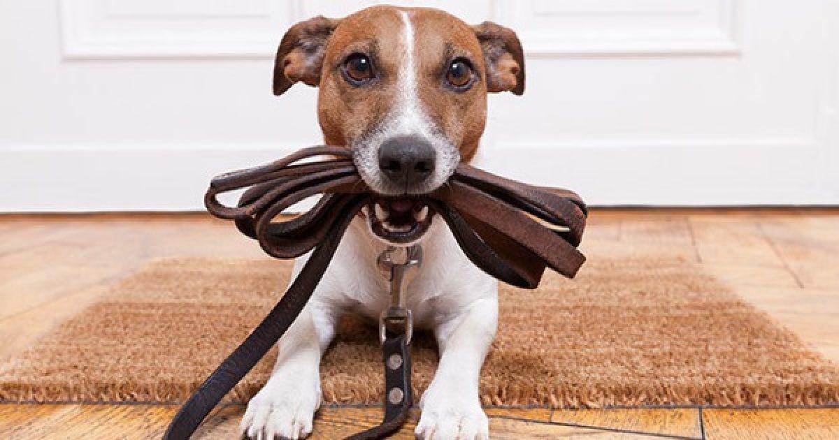 Sétáltasson kutyát az aktívabb életért!