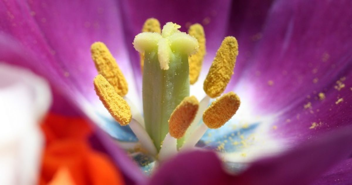 Az allergia homeopátiás megközelítése (3.)