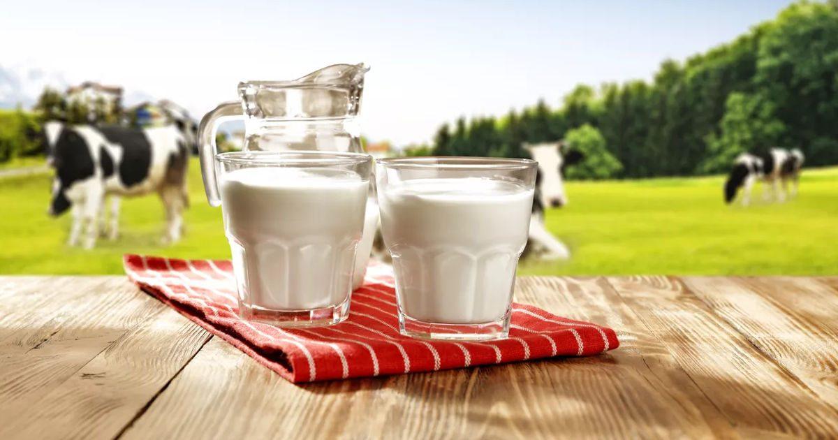Mennyire egészséges a tej?