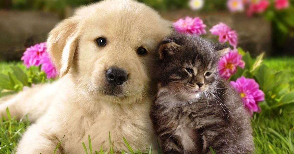 Kutya, macska – kevesebb allergia a családban