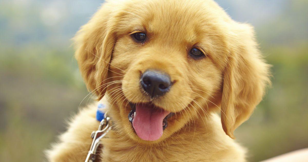 10 dolog a ház körül, ami mérgező lehet a kutya számára