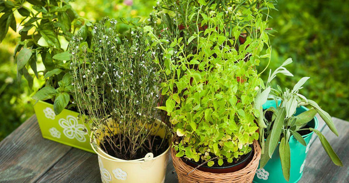 Gyógynövények, amelyek valóban hatásosak