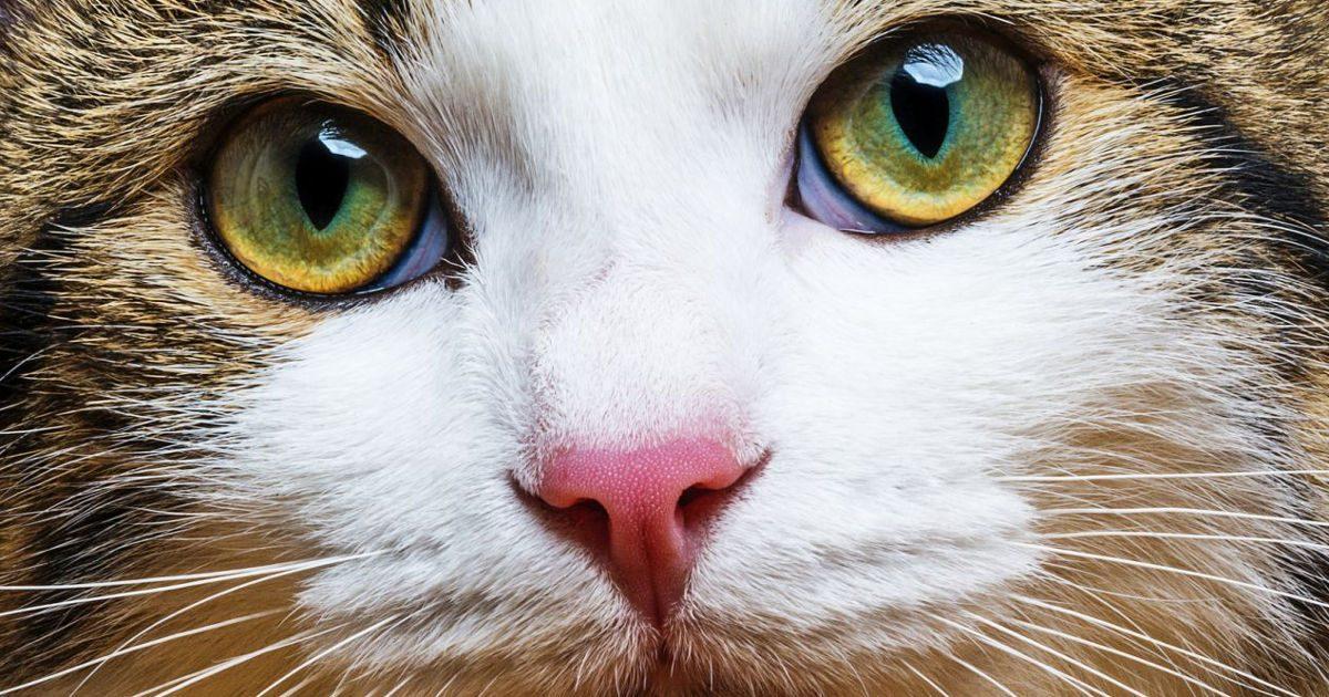 FIP – a rettegett macskabetegség