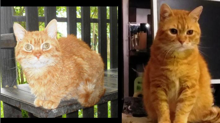 Maci betegen és egészségesen