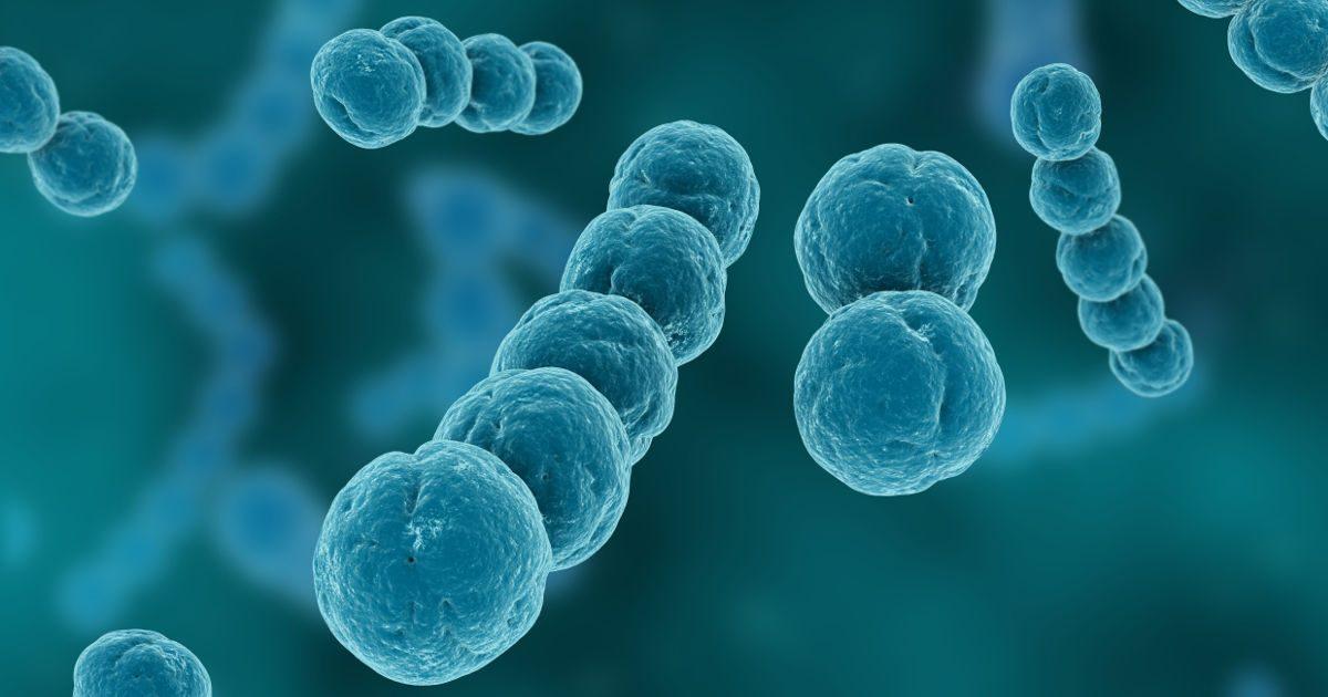 A Streptococcus legyőzője