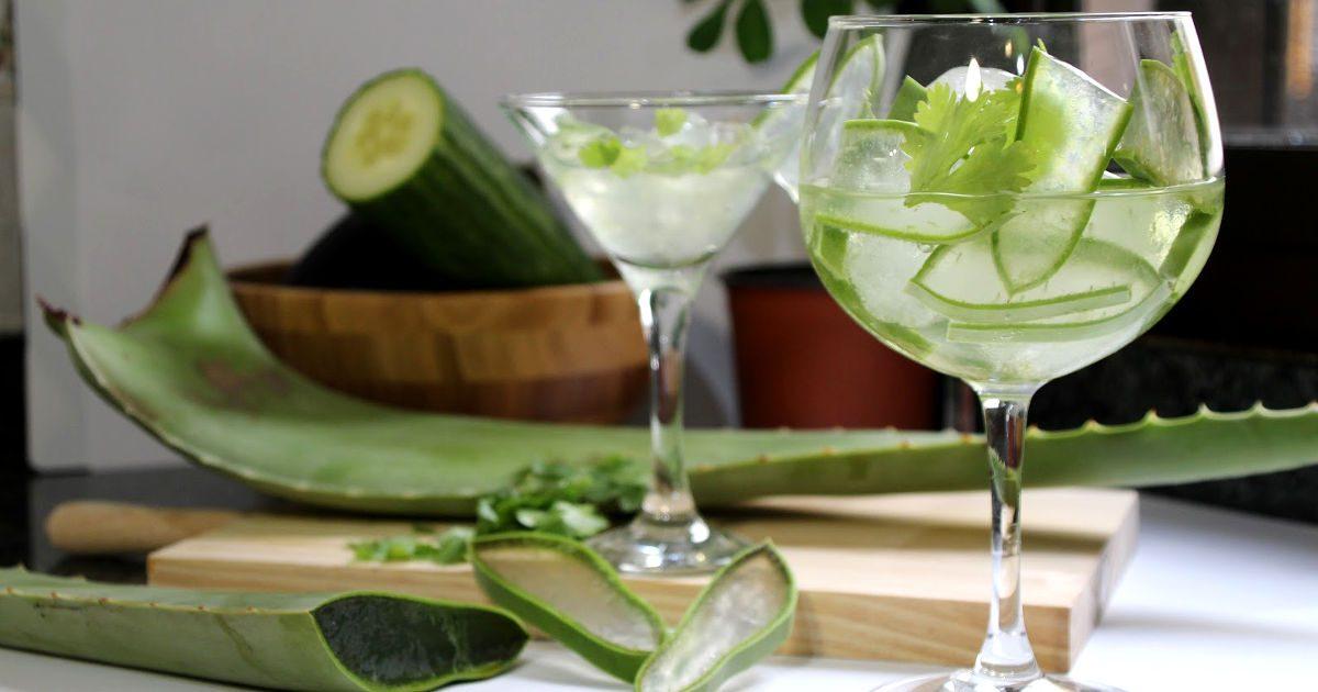 Aloe vera: mozgósítja az immunrendszert