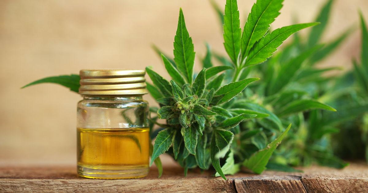 Kannabidiol – mitől más, mint a THC?